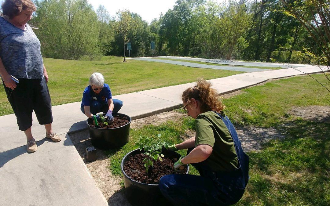 Huntsville Seniors